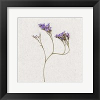 Framed Dainty Purple 2