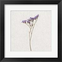 Framed Dainty Purple 3