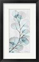 Framed Eucalyptus Glow 1