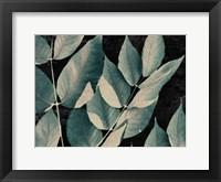 Framed Dusty Leaves 1