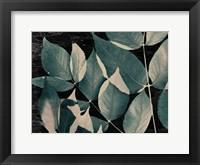 Framed Dusty Leaves 2