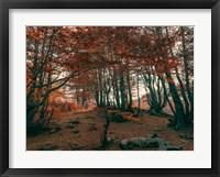 Framed Orange Season