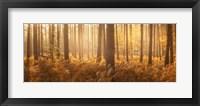 Framed Wyre Forest