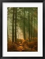 Framed Wyre Forest 3