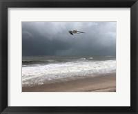 Framed Peaceful Flight