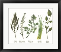 Framed Watercolor Herbs