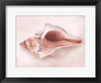 Conch Shell Blush II Framed Print