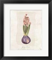 Framed Hyacinthus Orientalis II