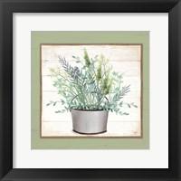 Pot of Herbs II Framed Print