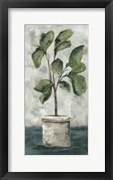 Framed Fiddle Leaf Fig