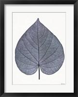 Framed Indigo Nature Study I