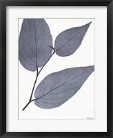 Framed Indigo Nature Study II