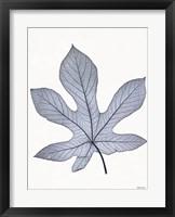 Framed Indigo Nature Study III