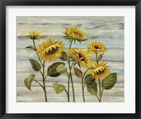 Framed Cottage Sunflowers
