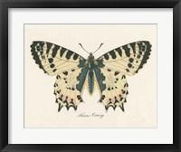 Framed Natures Butterfly I