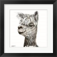 Framed Alphie the Alpaca