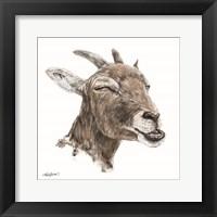 Framed Bill the Goat