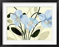 Framed Blue Poppies II