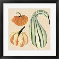 Decorative Gourd III Framed Print