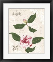 Dianne's Camelias III Framed Print