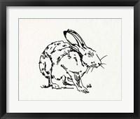 Framed Resting Hare II