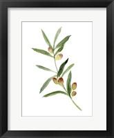 Framed Sweet Olive Branch I