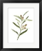 Framed Sweet Olive Branch II