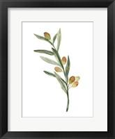 Framed Sweet Olive Branch III