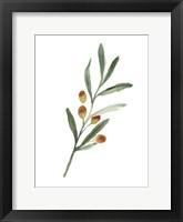 Framed Sweet Olive Branch IV