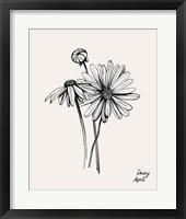Annual Flowers IV Framed Print