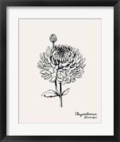 Framed Annual Flowers XI