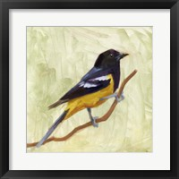Backyard Birds I Framed Print