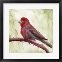 Backyard Birds II Framed Print