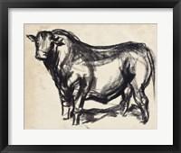 Black Angus II Framed Print