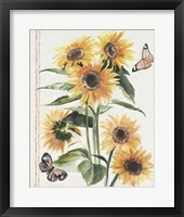Autumn Sunflowers I Framed Print