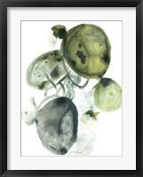 Orbital Lichen II Framed Print