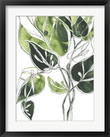 Expressive Palm II Framed Print