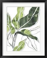 Expressive Palm III Framed Print