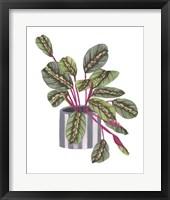 Prayer Plant I Framed Print