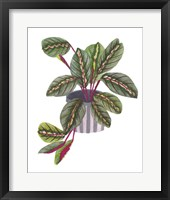 Prayer Plant II Framed Print