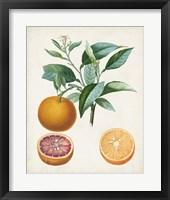 Framed Orange de Malte