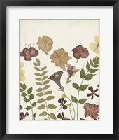 Pressed Flower Arrangement II Framed Print