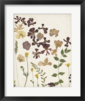 Pressed Flower Arrangement III Framed Print