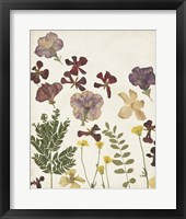 Pressed Flower Arrangement IV Framed Print