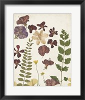 Pressed Flower Arrangement VI Framed Print