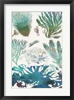 Aquatic Assemblage II Framed Print