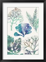 Aquatic Assemblage III Framed Print