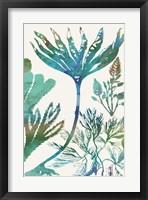Aquatic Assemblage IV Framed Print