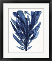 Indigo Ocean II Framed Print