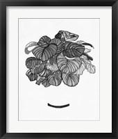 B&W Indoor Plant II Framed Print
